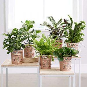 Luftreinigende Zimmerpflanzen